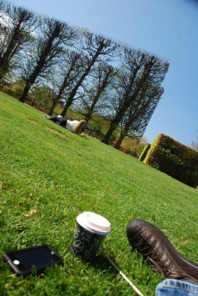 Im Lee der Hecke im Schlossgarten