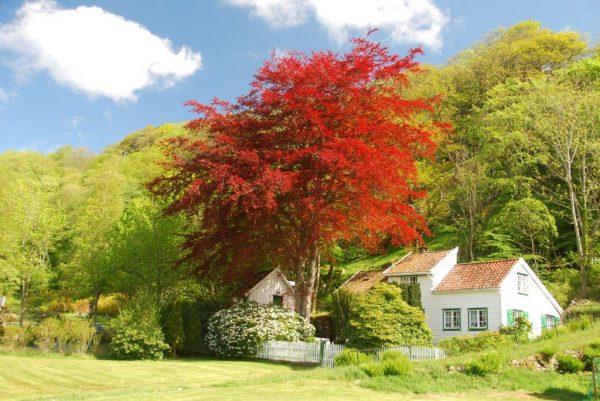 Was für ein Grün - Frühling in Kirkehamn