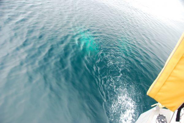 Buckelwal am Heck (eigentlich Bild 1)