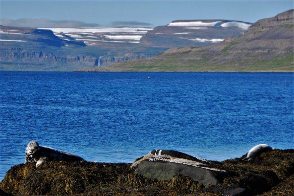 Robben beim Sonnenbaden