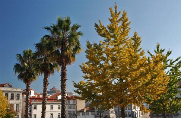 Herbst in Porto
