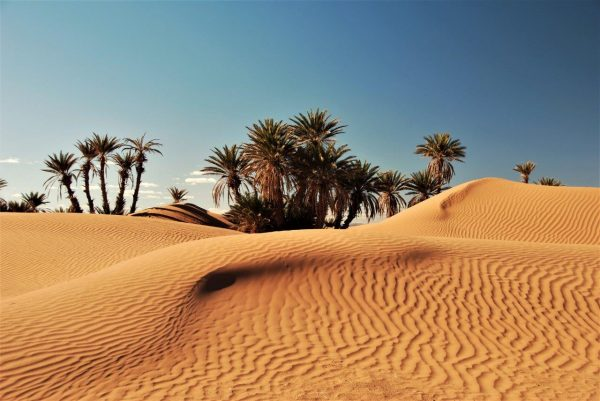 letzte Palmen, erste Dünen
