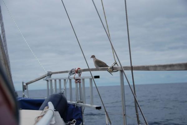da saß sie mochnicht über dem Segel ...